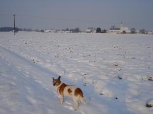 Nordic Walking über die Schneefelder mit Gasthund Arancio