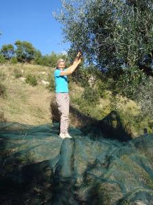 Olivenbäume stehen in den Marken gern in steilen Hängen!