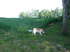 Morgenspaziergang mit Gast-Hund Arancio