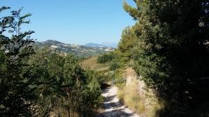 Der steile Weg zu unserem Haus in den Marken ist ein ideales Morgenwalk-Training.