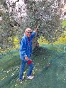 Bei der Olivenernte stehe ich ständig schräg - gutes Muskeltraining!