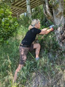 Olivenbaum-Ausfallschritt am Hang